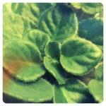 17. Green